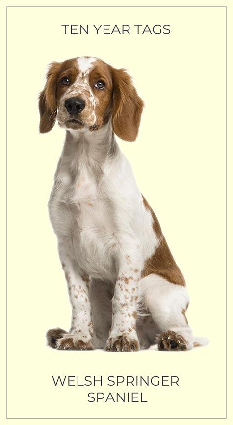 WESLH SPRINGER SPANIEL Brass Dog ID Tag