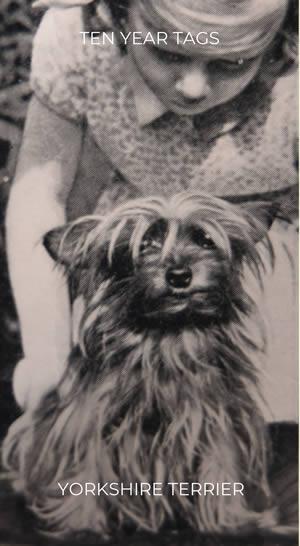 Yorkshire Terrier Cigarette Card